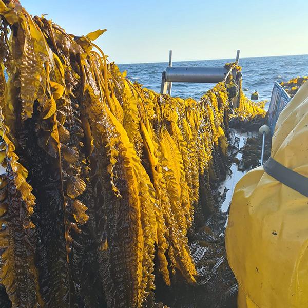photo du parc de culture d'algues Algolesko lignes d'aquaculture
